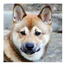 View full profile for Sakura Shiba