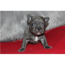 View full profile for Gaugers Little Bullies