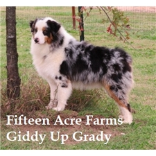 View full profile for Fifteen Acre Farms Australian Shepherds