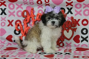 Ericka - Shichon for sale
