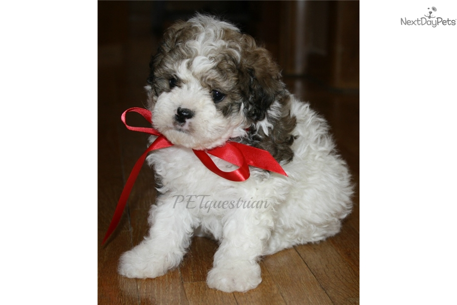 Picture of a Shichon
