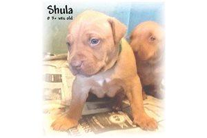 Picture of Shula RedNose