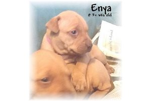 Picture of Enya RedNose