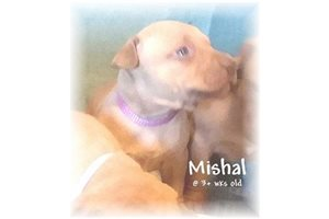 Picture of Mishal RedNose