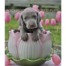 View full profile for Rockridge Treasured Pups