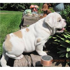 View full profile for Huskerland Bulldogs
