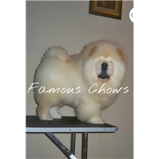 View full profile for FAMOUS CHOWS