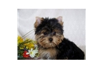 Puppies for Sale from Contented Puppies Paradise - Member since June
