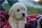 Featured Breeder of Beabulls with Puppies For Sale