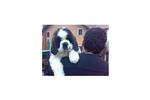 Featured Breeder of Saint Bernard St Bernards with Puppies For Sale