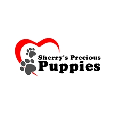 View full profile for Sherry's Shih Poos Medina, OH