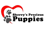 Featured Breeder of Shih Poo Shihpoos with Puppies For Sale
