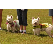 View full profile for Sugar Creek Westies