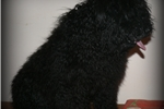 Picture of Barka