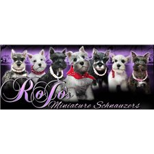 View full profile for Rojo's Miniature Schnauzers