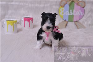Picture of AKC Rosie