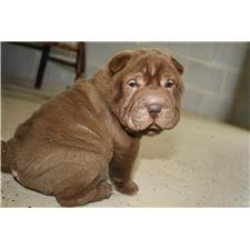 View full profile for Southern-Sharpei
