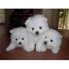 View full profile for Home Grown Puppies,Inc.