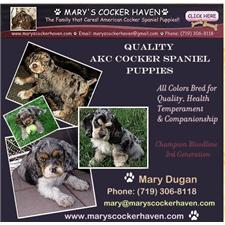 View full profile for Mary's Cocker Haven
