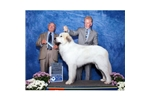 Featured Breeder of Great Pyrenees with Puppies For Sale