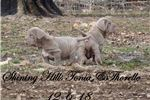 Picture of Show prospect Tawny male
