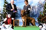 Picture of GCH SIRE, CH DAM, MAHOGAIN, TAWNY AND BLACK!
