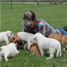 View full profile for Triner's American Bulldogs