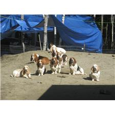 View full profile for Hounds of east bay kennels