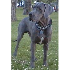 View full profile for Country Danes