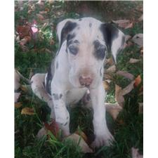 View full profile for Blue Starre Danes