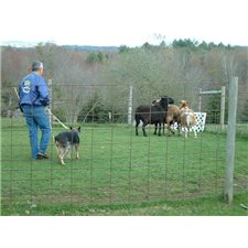 View full profile for Cattle Dog Ranch And Equine Facility