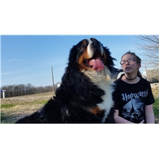 View full profile for Kates Country Canines