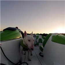 View full profile for Sunset Ridge Bull Terriers