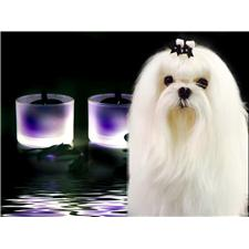 View full profile for Storybook Maltese