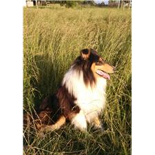 View full profile for Voneida Collies