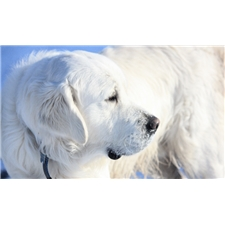 View full profile for Texas English Retrievers