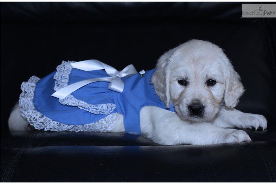 Annapolis Maryland Dog Training