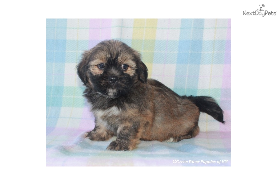 Best Food For Lhasa Apso Puppies