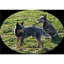 View full profile for Rogers Heelers