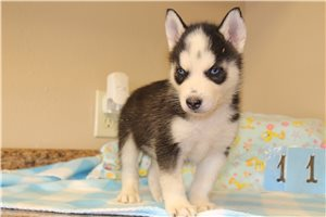 Picture of Husky M eleven