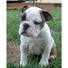 View full profile for Chalkhill Bullies