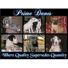 View full profile for Prime Danes