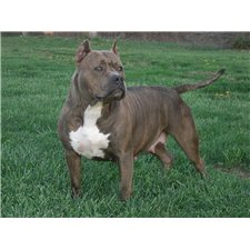 View full profile for T.O.B. Kennels