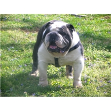 View full profile for BevsBulldogs