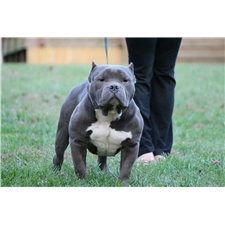 View full profile for Double OO Bullies