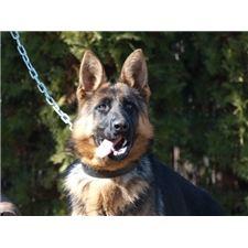 View full profile for Superior Shepherd