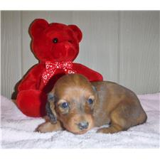 View full profile for Beaver Valley Doxies