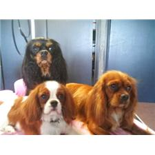 View full profile for Midaywin Cavaliers