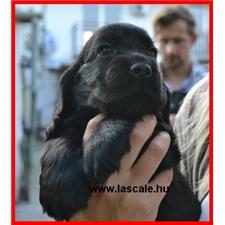 View full profile for La Scale Kennel