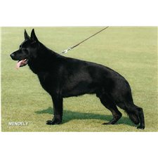 View full profile for SpitzenHund Kennels